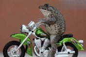 青蛙还有这癖好?