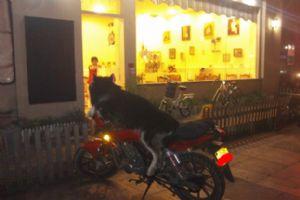 最佳摩托车骑手非他莫属