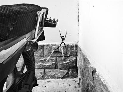 """澳门美高梅娱乐手机版闲置3个月巴掌大蜘蛛结网""""秀英文"""""""