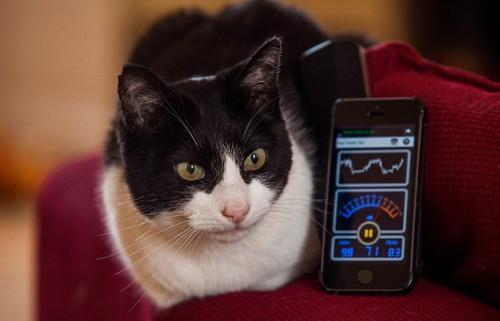 英国猫获吉尼斯世界纪录叫声像发动摩托车