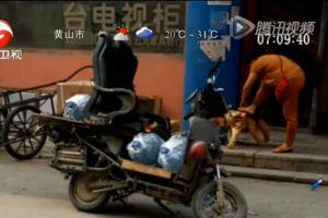 送水小哥巧改装 将沙发装到摩托上当坐骑