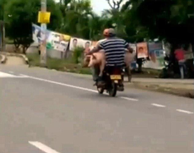 哥伦比亚两男子骑摩托车运大沙发惊呆路人