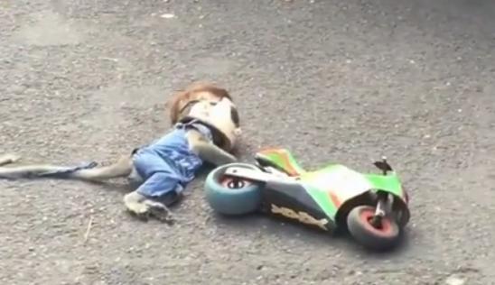 """猴子+摩托车,盘点摩圈里的""""红孩儿"""""""