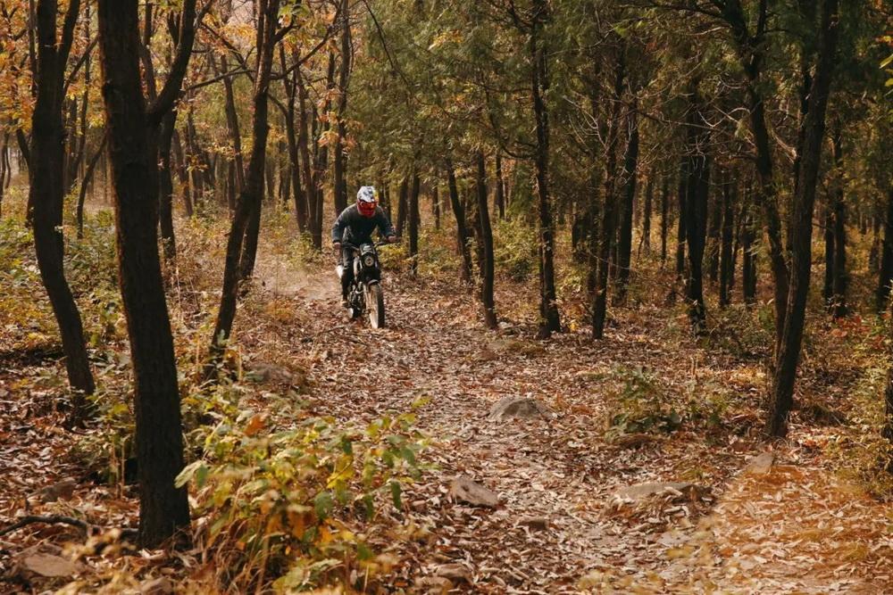 秋日的林道属于你和魔术师