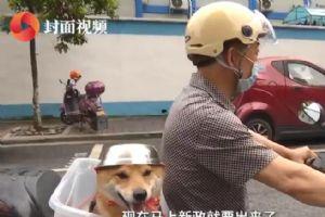 大爷给骑车狗狗做头盔 响应政策为了安全